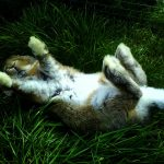 Rest! Relax! Rejuvenate!