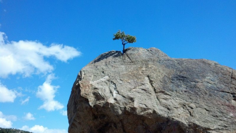 Angel of Courage - Single tree on a mountain top