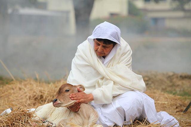 Woman petting a calf.