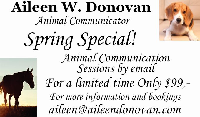 Ad with special. Click to email Aileen